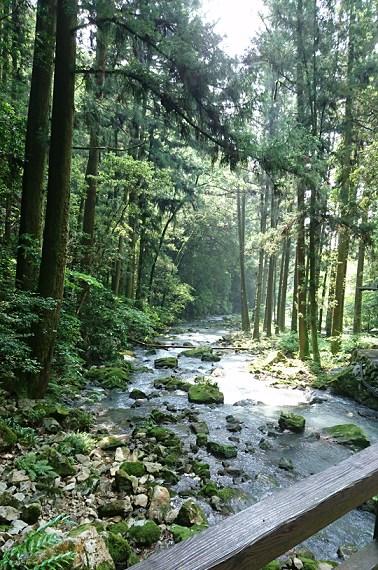 秋芳洞の木々