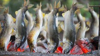 日光市の大渡やな『船場亭』で鮎の塩焼きを頬張る