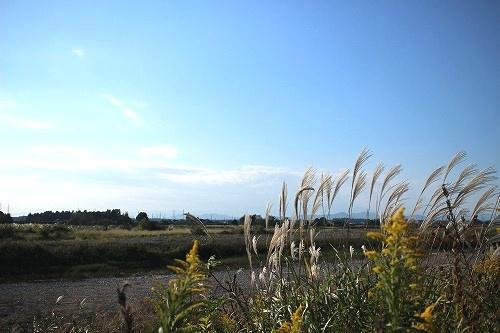 鬼怒川沿いのススキ