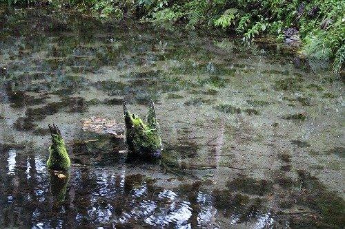 神の子池のトトロ