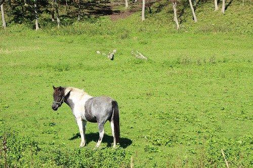 釧路で見かけた馬