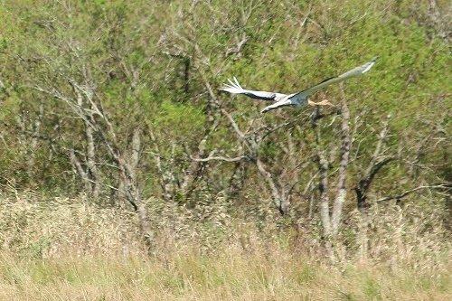 釧路で見かけた野鳥