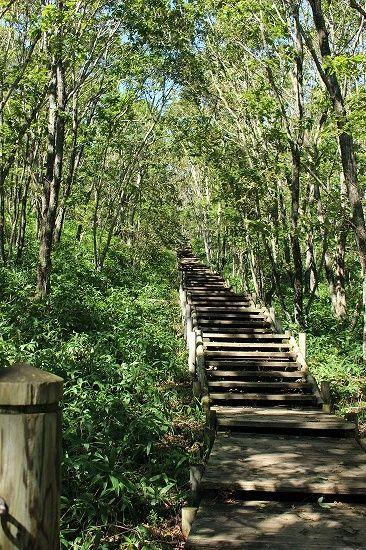 釧路市湿原展望台の木道のこもれびの階段
