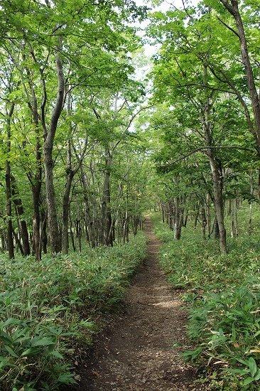 フレぺの滝への遊歩道