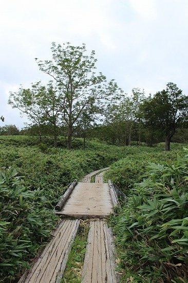 知床五湖の地上遊歩道