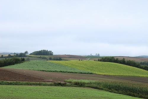 新栄の丘からの景色