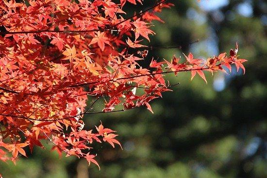 紅葉シーズンの日光東照宮